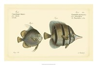 Antique Fish III Fine-Art Print