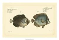 Antique Fish V Fine-Art Print