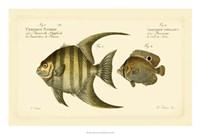 Antique Fish VI Fine-Art Print