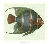 Angel Fish I Fine-Art Print