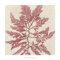 Brilliant Seaweed I Fine-Art Print