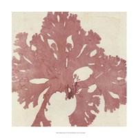 Brilliant Seaweed V Fine-Art Print