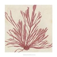 Brilliant Seaweed IX Fine-Art Print
