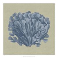 Chambray Coral III Fine-Art Print