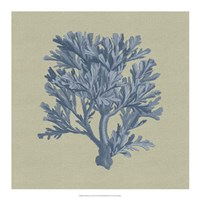 Chambray Coral IV Fine-Art Print