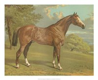 Cassell's Thoroughbred I Fine-Art Print