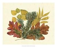 White Oak, Balsam Fir & Yellow Birch Fine-Art Print