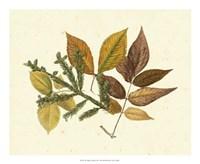 Elm, Spruce, Beech & Ash Fine-Art Print