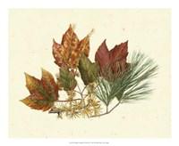 Red Maple, Tamarack & White Pine Fine-Art Print