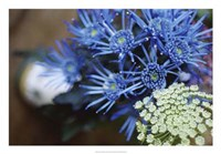 Drummond Blue Fine-Art Print