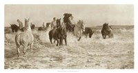 Horses Bathing Fine-Art Print
