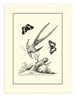 B&W Longtailed Hummingbird  (1742) Fine-Art Print
