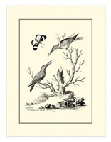 B&W The Hummingbirds (1742) Fine-Art Print