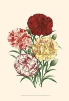 Bountiful Bouquet IV Fine-Art Print