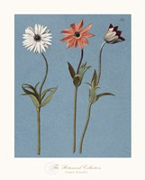 Three Daisies Fine-Art Print
