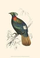 Birds of Costa Rica II Fine-Art Print