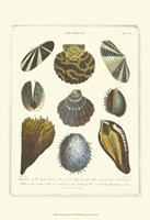 Conchology Collection I Fine-Art Print