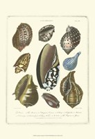 Conchology Collection II Fine-Art Print