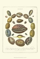 Conchology Collection III Fine-Art Print