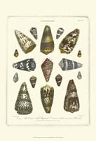 Conchology Collection IV Fine-Art Print