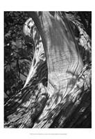 Texture Fine-Art Print