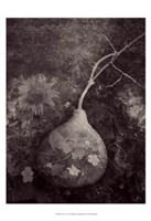 Gourd IV Fine-Art Print