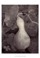 Gourd V Fine-Art Print
