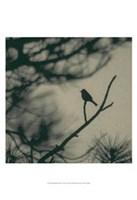 Caligraphy Bird I Fine-Art Print