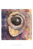 Seashell-Snail Fine-Art Print