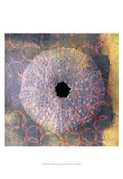 Seashell-Urchin Fine-Art Print