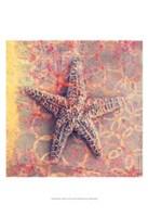 Seashell-Starfish Fine-Art Print