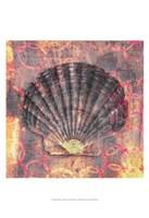 Seashell-Scallop Fine-Art Print