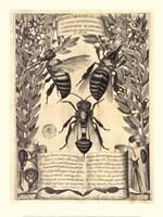 Melissographia, 1625 Fine-Art Print