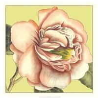 Flower Power I Fine-Art Print