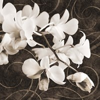 Orchid & Swirls II Fine-Art Print