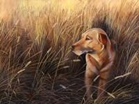Golden Grass Fine-Art Print