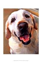 Yellow Dog Smile Fine-Art Print