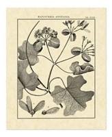 Vintage Botanical Study II Fine-Art Print