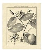 Vintage Botanical Study III Fine-Art Print