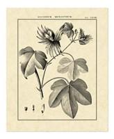 Vintage Botanical Study IV Fine-Art Print