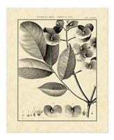 Vintage Botanical Study V Fine-Art Print