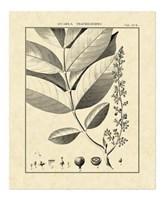 Vintage Botanical Study VI Fine-Art Print