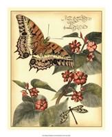 Whimsical Butterflies II Fine-Art Print