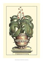 Antique Munting Aloe II Fine-Art Print