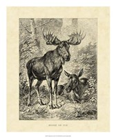 Vintage Moose or Elk Fine-Art Print