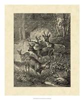 Vintage Roe Deer I Fine-Art Print