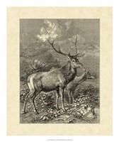 Vintage Roe Deer II Fine-Art Print
