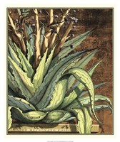 Graphic Aloe I Fine-Art Print
