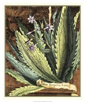 Graphic Aloe II Fine-Art Print