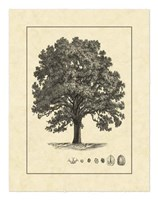 Vintage Tree I Fine-Art Print